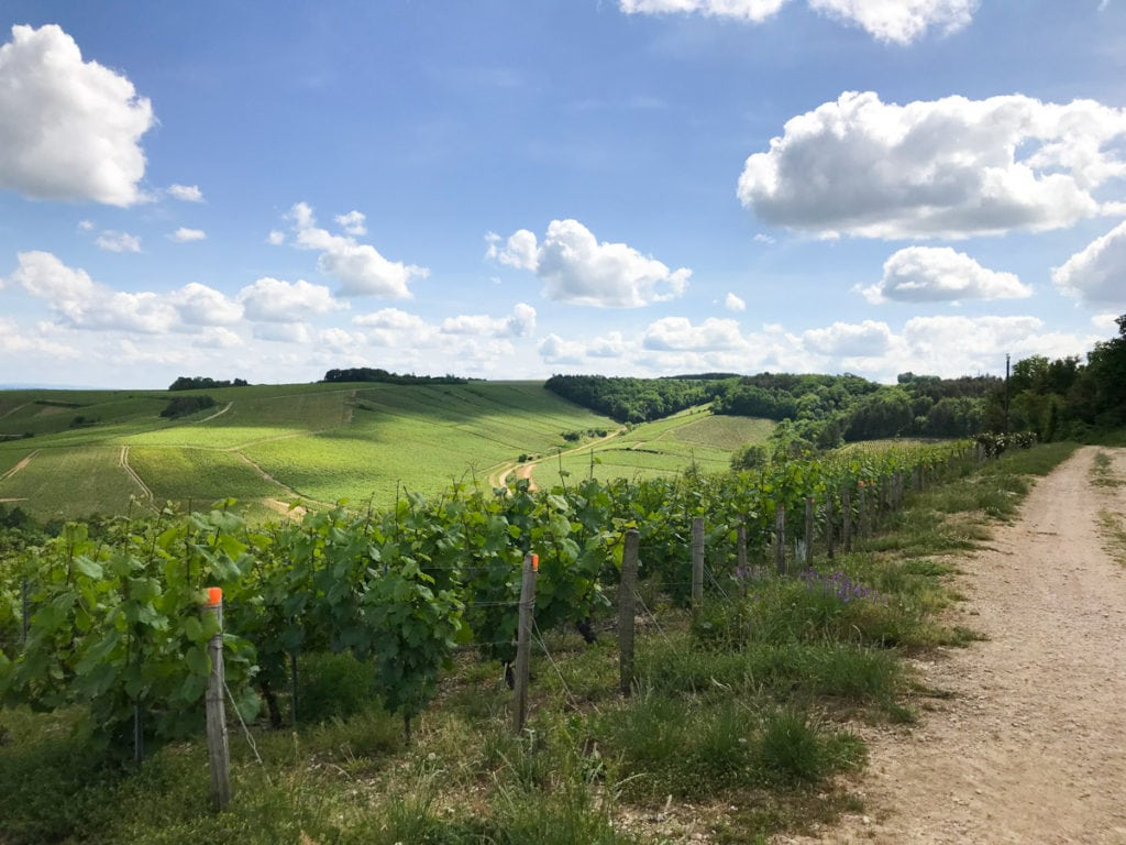 Chablis Countryside